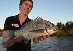 Bream Whippy Worm